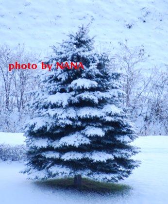 winter15-2.jpg
