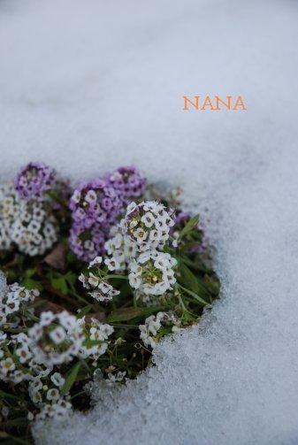 winter15-5.jpg