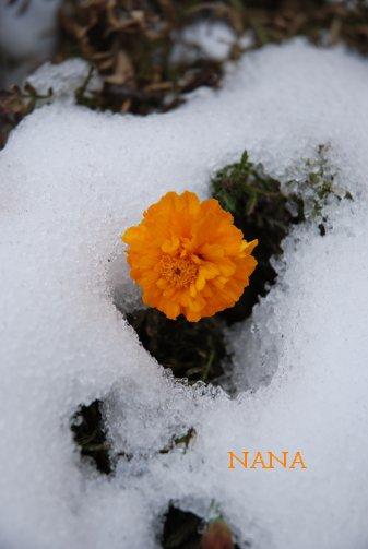 winter15-7.jpg