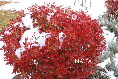 winter15-8.jpg