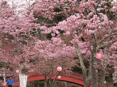 28厚岸桜カキ祭り