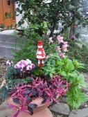 クリスマス寄せ植え2011