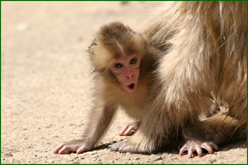 お猿の子供