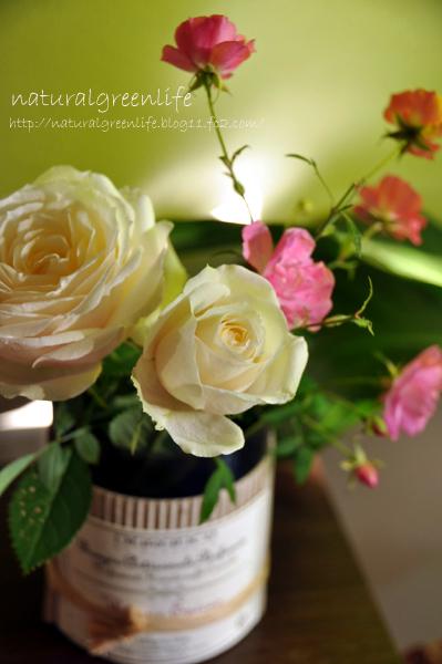 薔薇 アンドロメダ