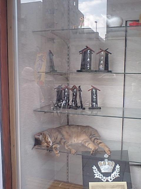 catinshowwindow