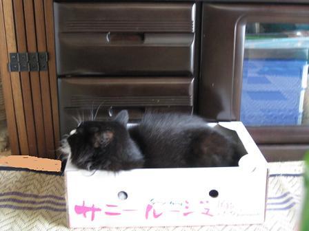 箱に入るルナ
