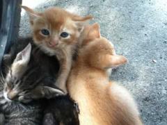 子猫たち1 (2)_R