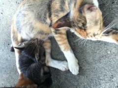 子猫たち1_R