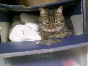 アンクの寝床-3