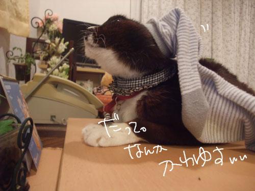 20111030_4.jpg