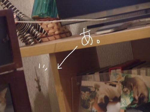 20111117_4.jpg