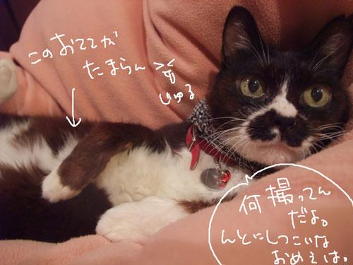 20111117_6.jpg