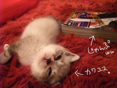 20111128_4_20111128205724.jpg