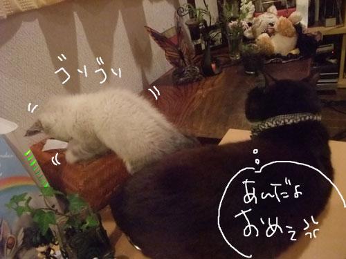 20111208_4.jpg
