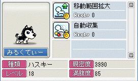 Maple662.jpg