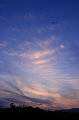 残照の空に舞う@昆陽池公園南池畔