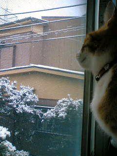 雪見ピッケ2