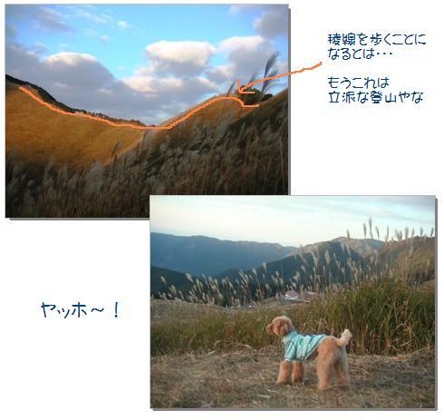 13_20071108003427.jpg