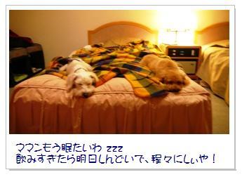 13_20071209021456.jpg