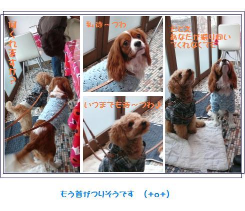 13_20071212234445.jpg