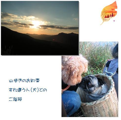 15_20071108003811.jpg