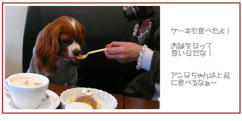 ひつじの国5