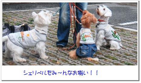 5_20071107033521.jpg