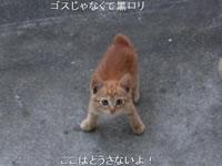 ねこぬこあwせdrftgyふじこlp+α