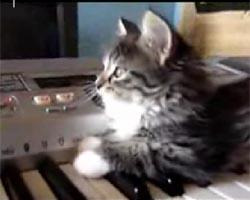 演奏する猫