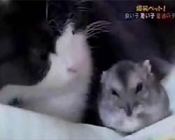 癒し 仲良しネコとハムスター
