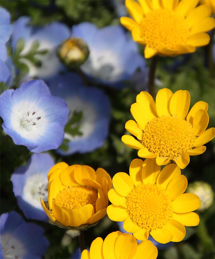 シンデレラ城の花