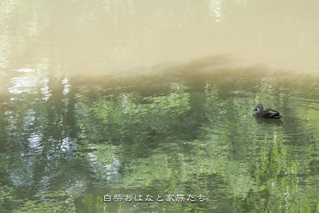 20110606-_MG_7408.jpg