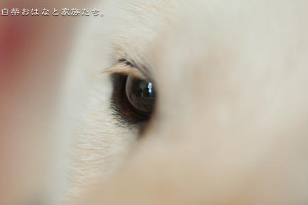 20110611-_MG_7787.jpg