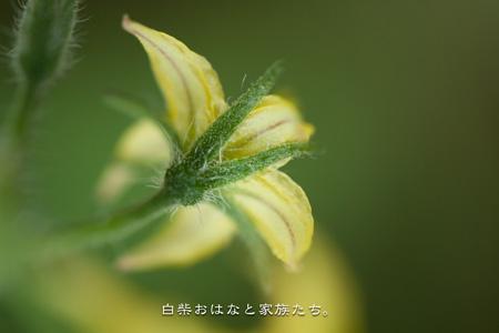 20110611-_MG_7887.jpg