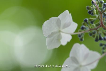 20110613-_MG_8058.jpg
