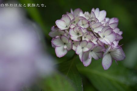 20110613-_MG_8184.jpg
