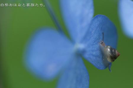 20110613-_MG_8281.jpg