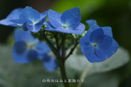 20110613-_MG_8368.jpg