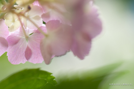 20110621-_MG_9744.jpg