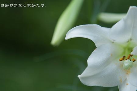 20110814-_MG_2946.jpg