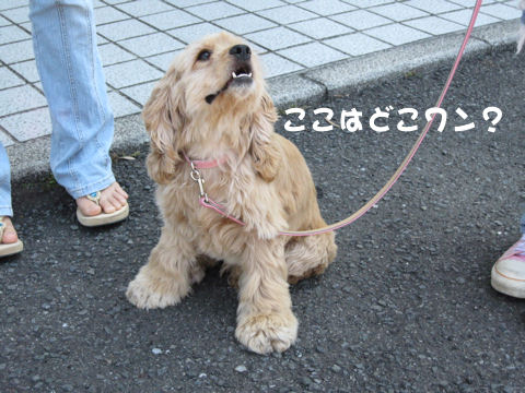 2007/5/20 EVE (1)