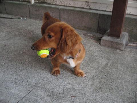 うめのボール遊び