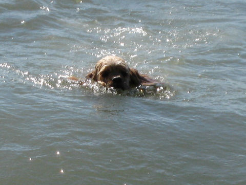 イヴの初泳ぎ!