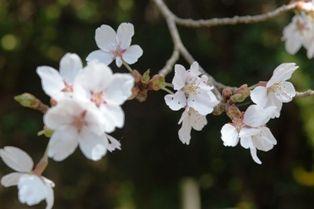花の郷竜谷 012sjj