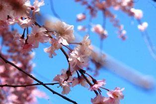 花の郷竜谷 013sjj
