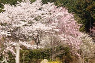 花の郷竜谷 002sj