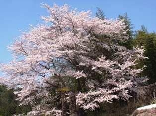 三井寺 157.jsjpg