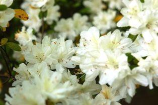 花の郷滝谷 047