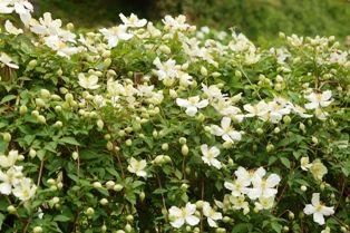 花の郷滝谷 017