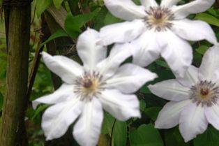 花の郷滝谷 019